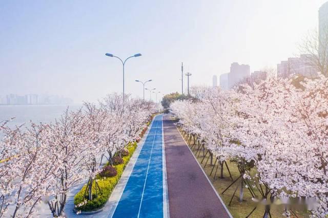 杭州樱花跑道